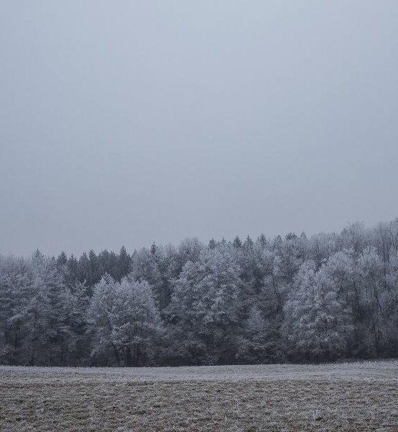 Samuel Bjørk 'Drengen i sneen'